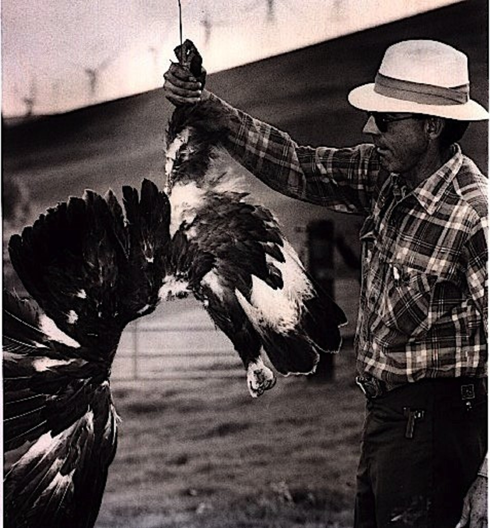 6 Beheaded Golden Eagle Altamont Pass