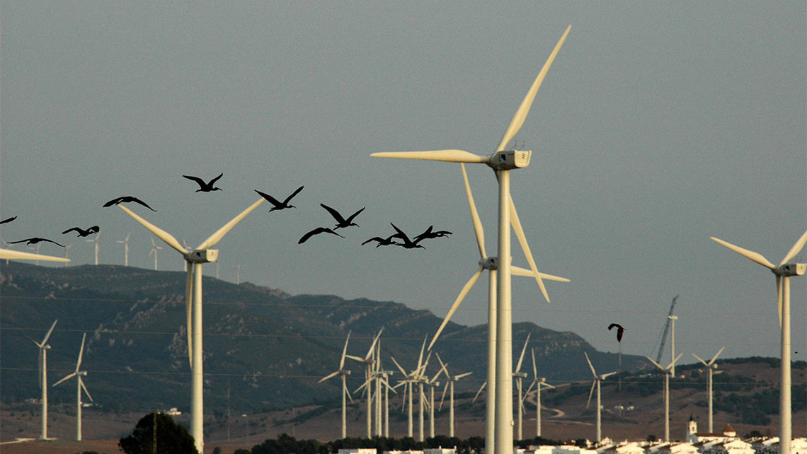 Spanish Wind Farms Kill 6 - 8 Million Birds and Bats