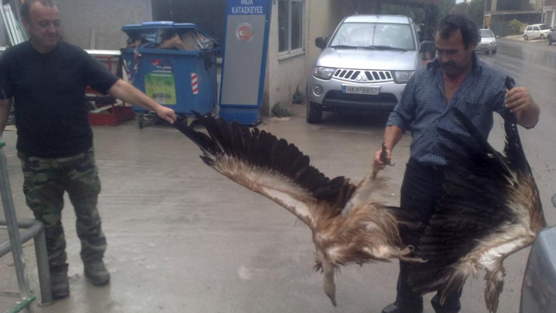 Wind Turbine Dead Griffin Vulture 2