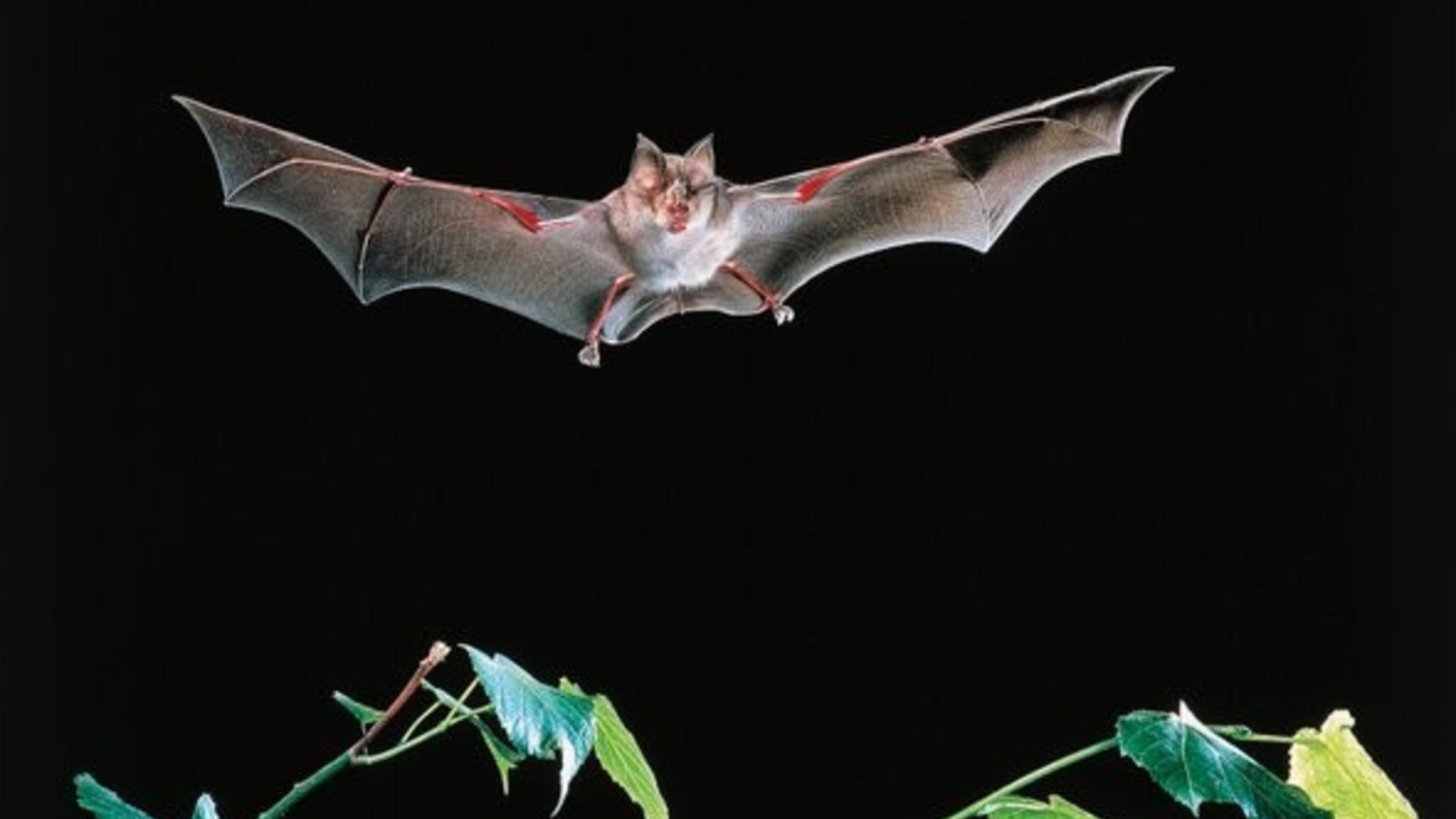 Bat Killings