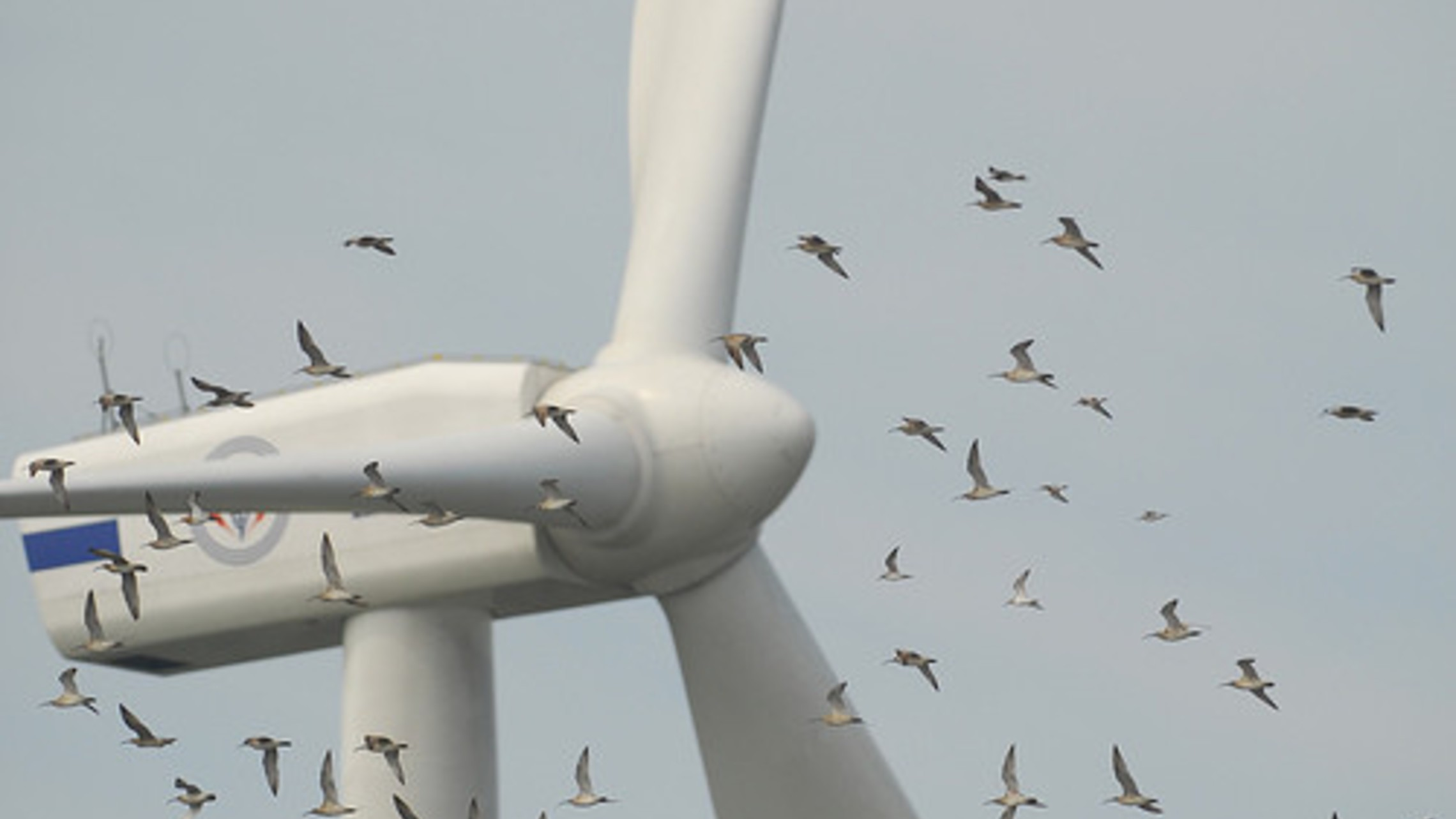 Wind Turbines And Birds Could Mix Usa1