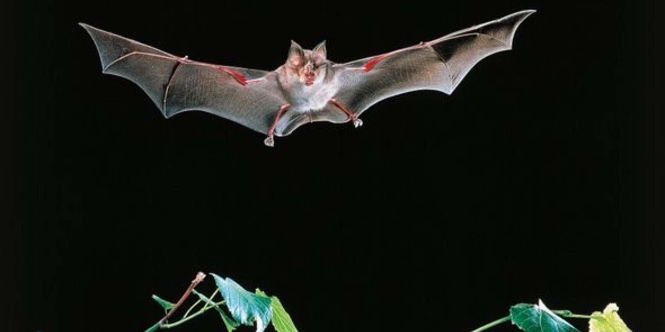 Bat Killings